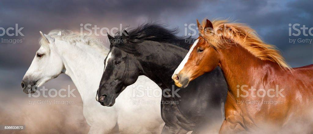 Horse herd portrait stock photo