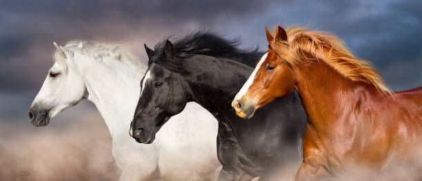 paard kudde portret - paard stockfoto's en -beelden