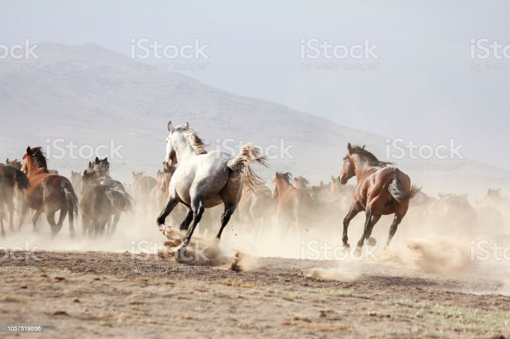 Horse Herd Run Fast In Desert Dust Against Dramatic Sunset Sky Wild Horses Stock Photo Download Image Now Istock