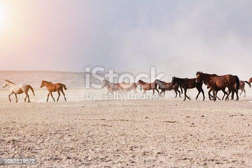 Image result for wild horses prairie sunset