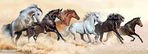 Horse herd run in clouds of dust picture id523243588?b=1&k=6&m=523243588&s=612x612&h=wvtbj5 iq6agyoolmaxdux0forf viocnpkxqybuzq8=