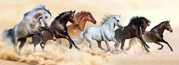 horse herd run in clouds of dust - 種馬 個照片及圖片檔