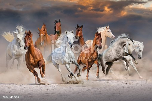 istock Horse herd run 599134884