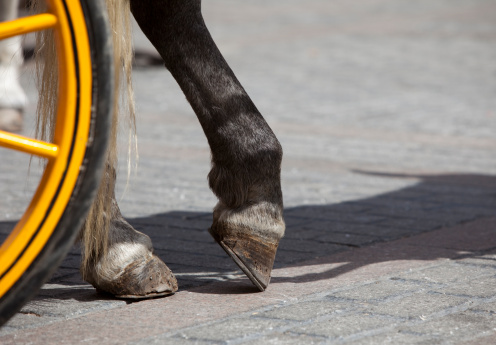 Horse Hooves Detail in Granada Spain on horse that pulls carriages