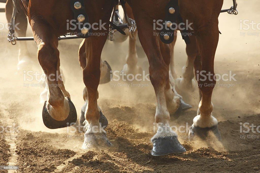 Horse Hooves stock photo