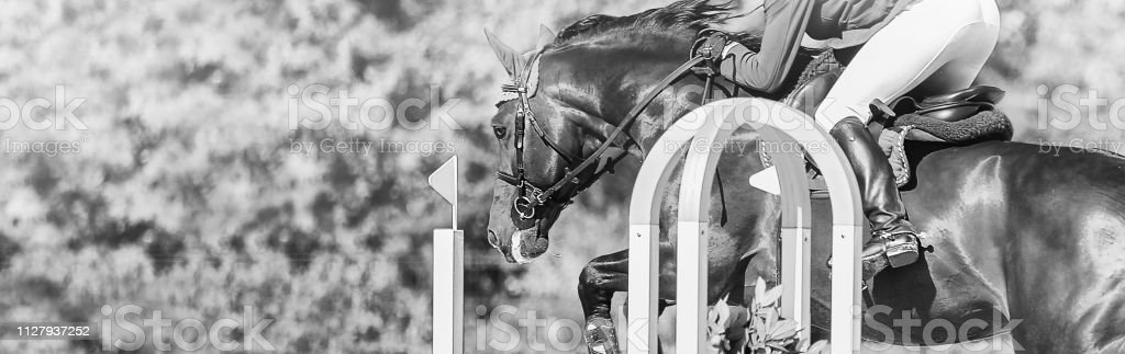 Horse Horizontal Black And White Banner For Website Header Poster Wallpaper Monochrome Design Stock Photo Download Image Now Istock