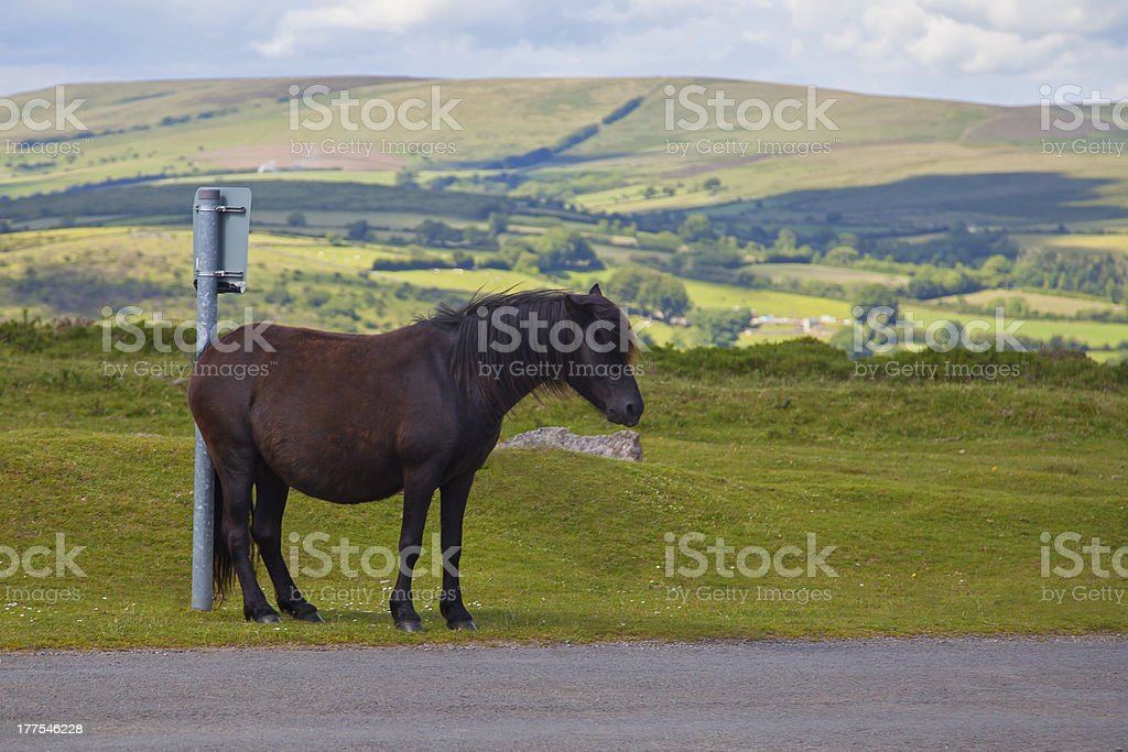 Horse humor, pony scratching bottom - waiting for bus?! royalty-free stock photo