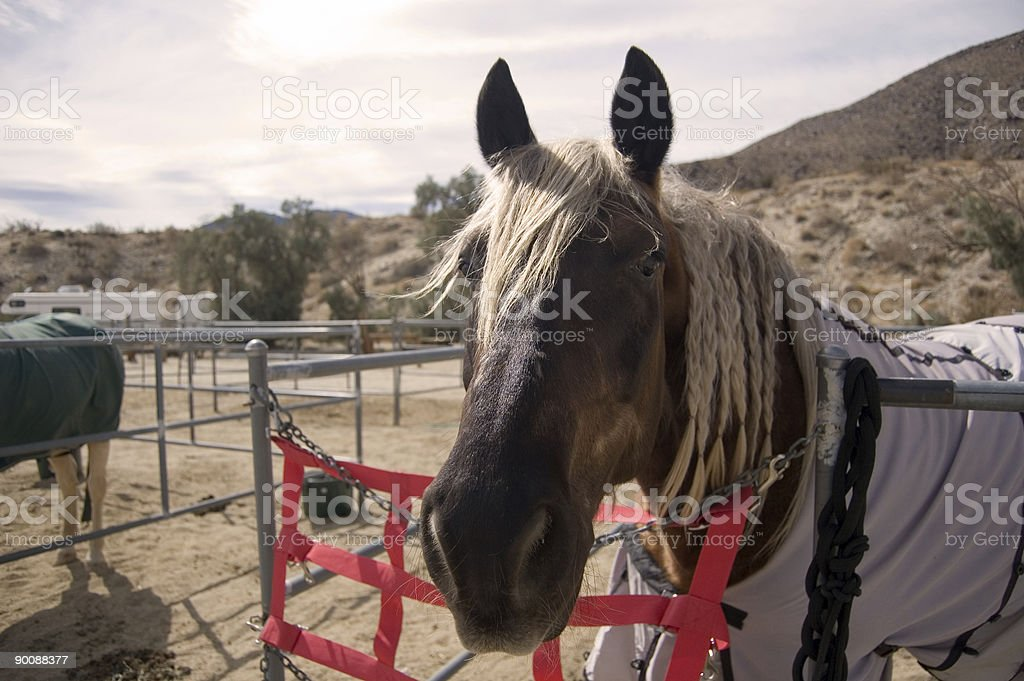 Horse in a Corral royalty-free stock photo