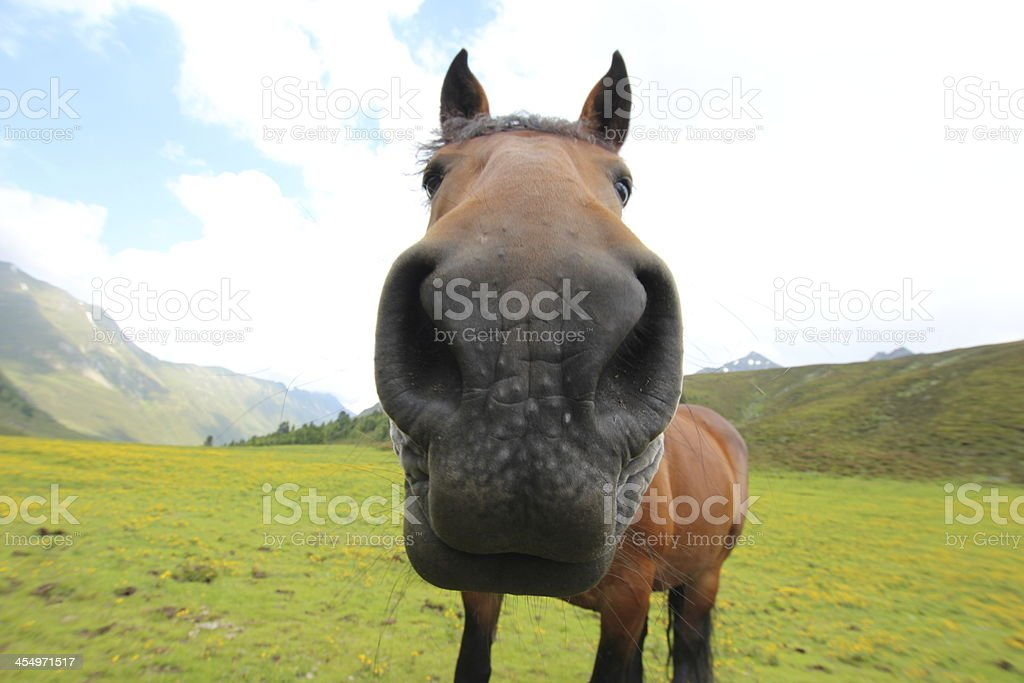 Horse in a Field, Alpine Meadow - foto de stock