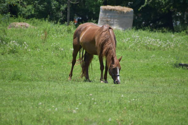 Horse in a grass field stock photo