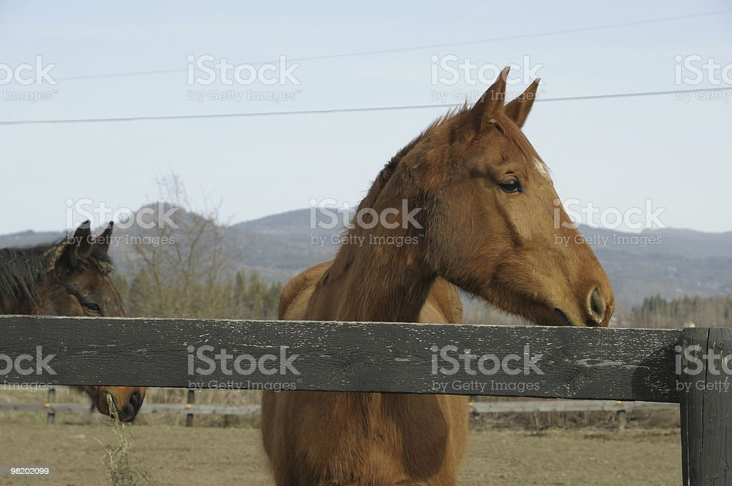 Horse in a Paddock royalty-free stock photo