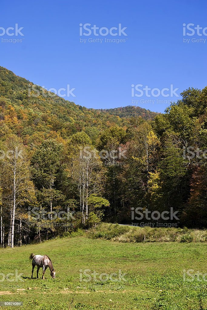 Horse in a Pasture royalty-free stock photo