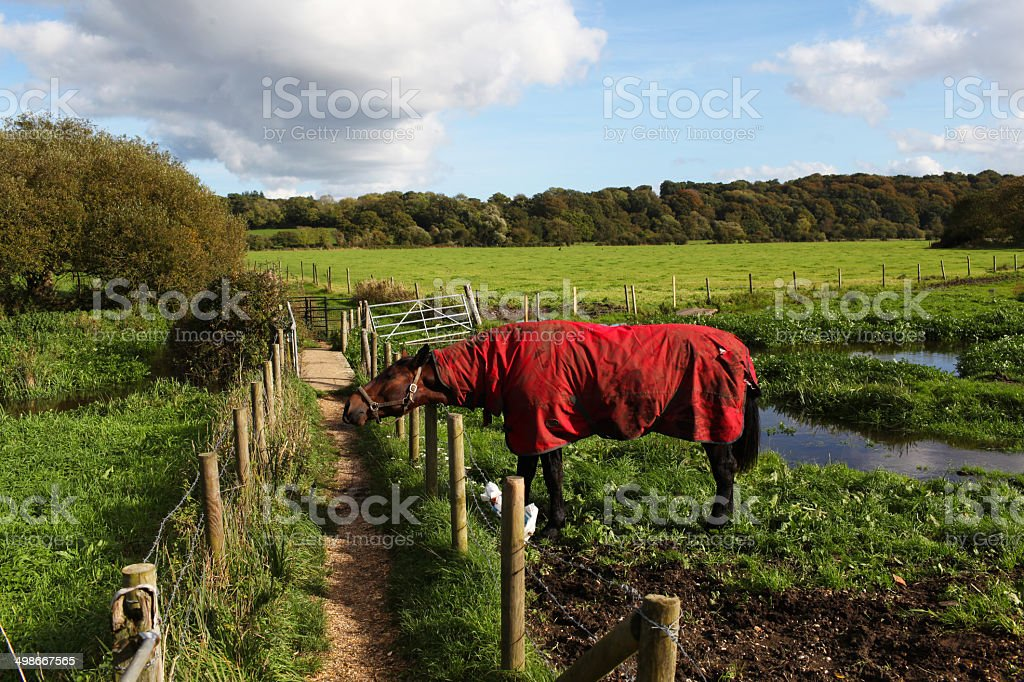 horse in a red equine coat,the Avon Valley footpath royalty-free stock photo