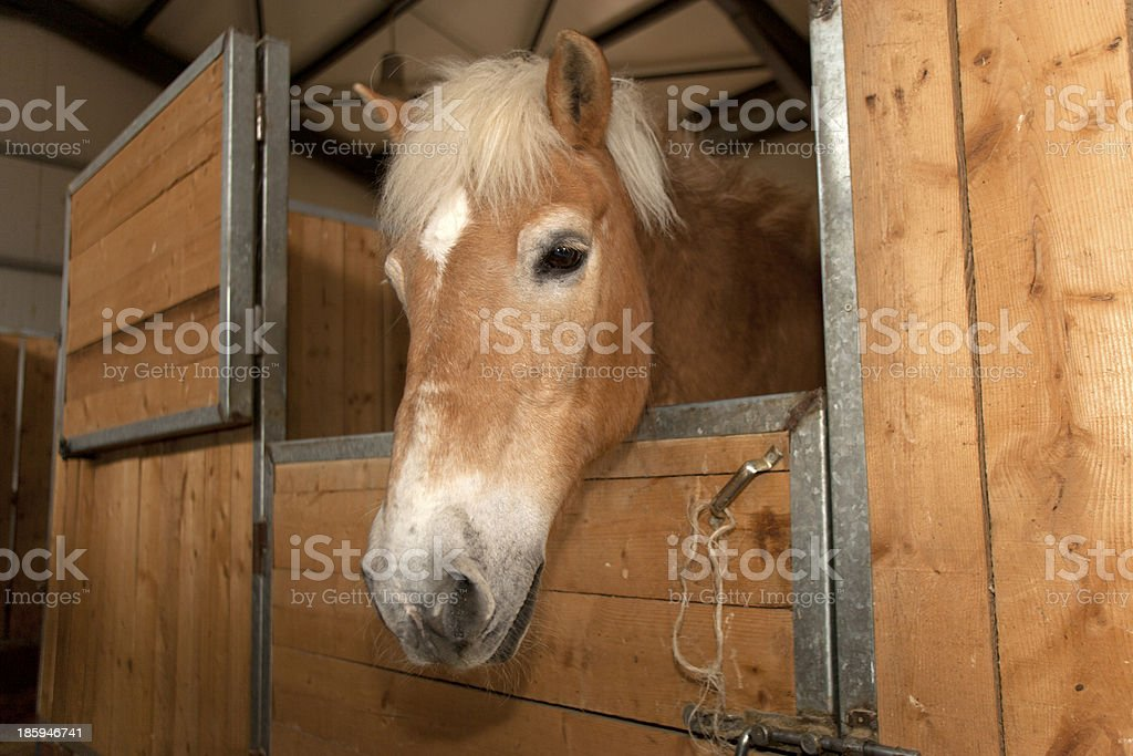 Horse in a stable stock photo