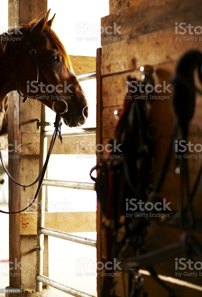 Horse in a stable. royalty-free stock photo