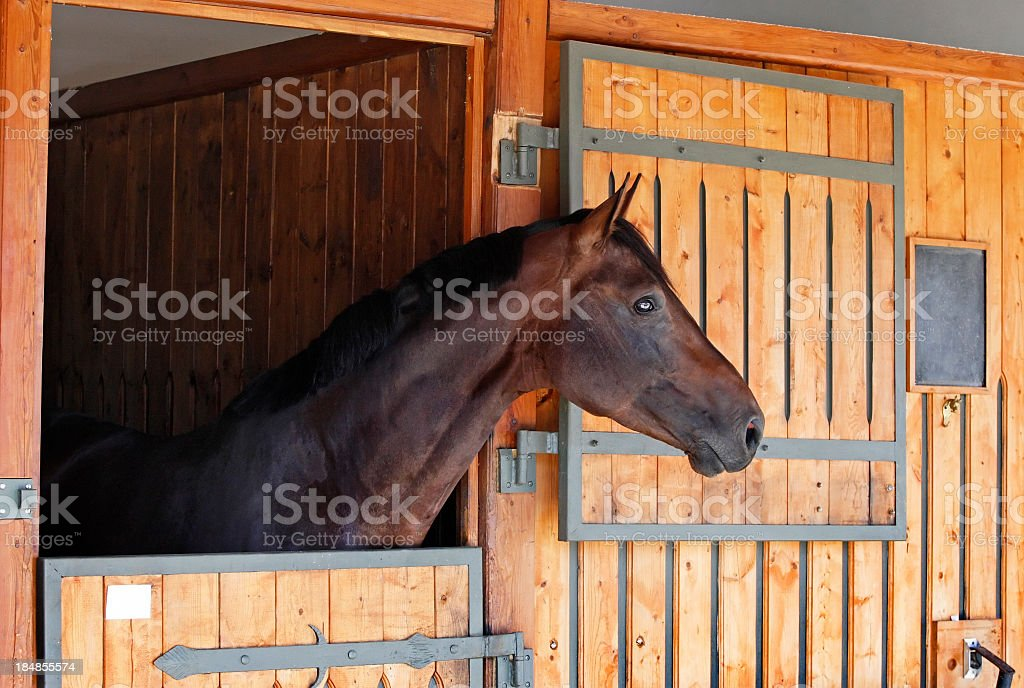 A horse in a stable with the door open stock photo