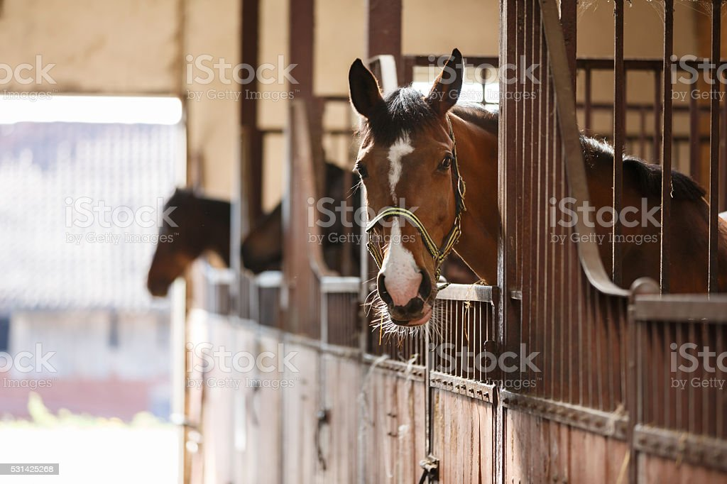 Horse in a stall stock photo