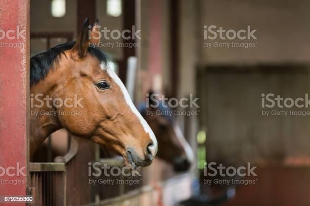 Horse in a stall picture id679255360?b=1&k=6&m=679255360&s=612x612&h=bas3l6apxresnpz 0uhtm8lfbbfwyi8r2xzirr24n q=