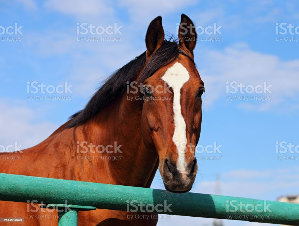 Horse in a stud farm stock photo