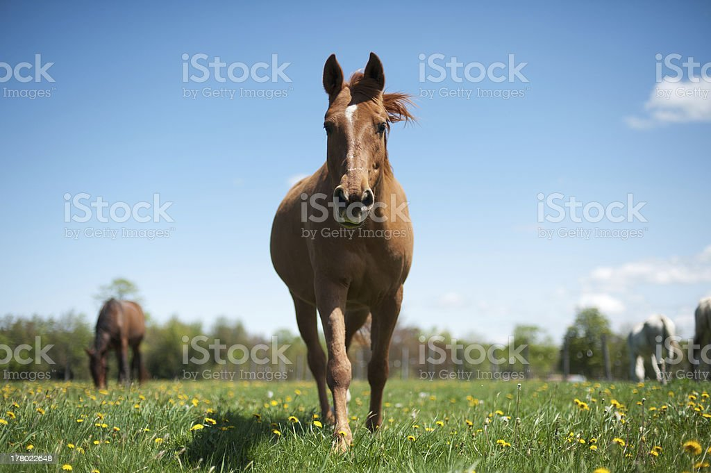 Horse in a sunny pasture stock photo