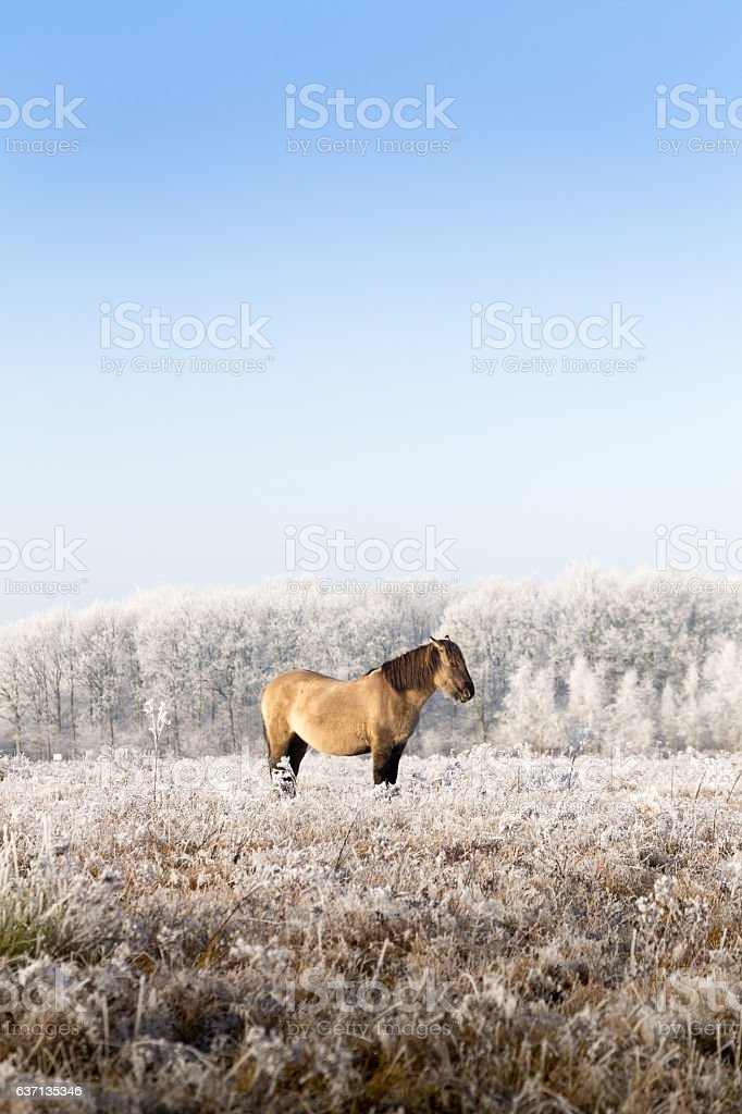 Horse in a winter landscape. – Foto