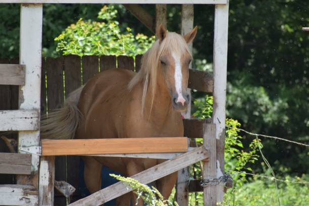 Horse in an old stable stock photo