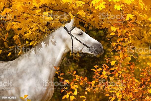 Horse in autumn park picture id510490588?b=1&k=6&m=510490588&s=612x612&h=1zz33tyagrzbocnfnpdar  pv 8uoguttqjtess cog=