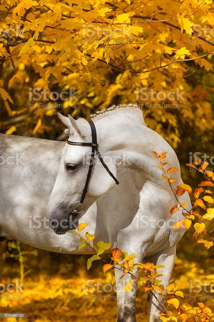 Horse in autumn park stock photo