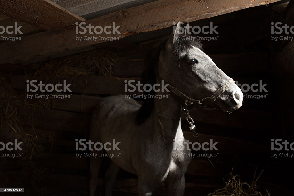 Horse in barn looking outside stock photo