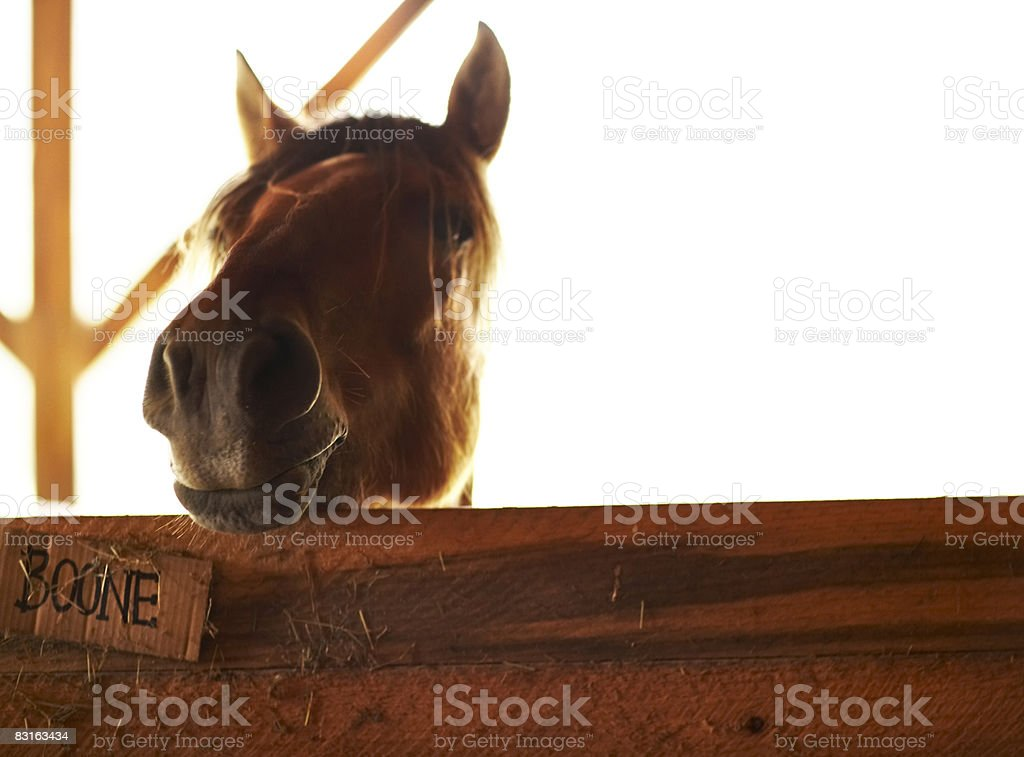 Horse in barn royalty free stockfoto
