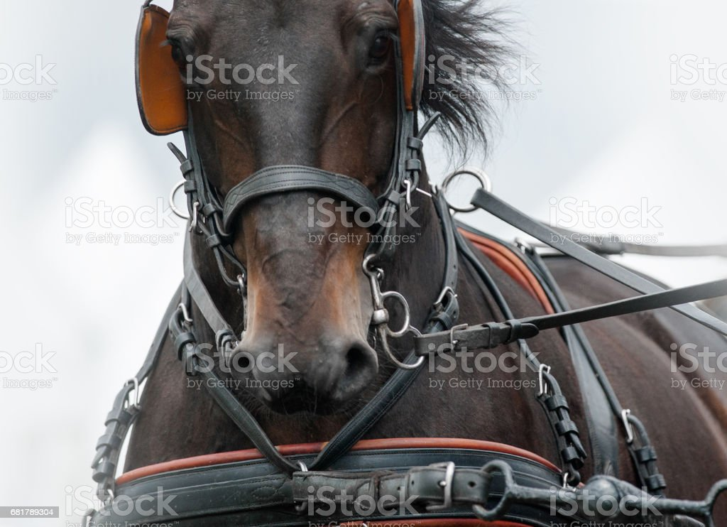 Horse in carriage stock photo