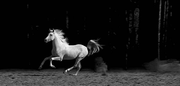 Horse in Corral, Black and White  arabian horse stock pictures, royalty-free photos & images
