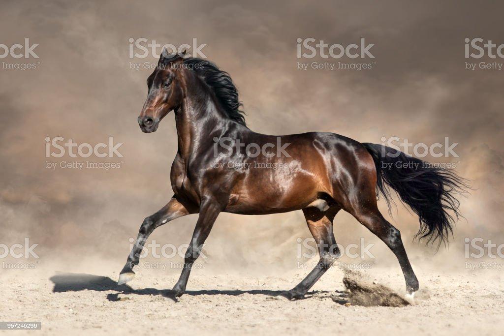Horse in desert dust stock photo