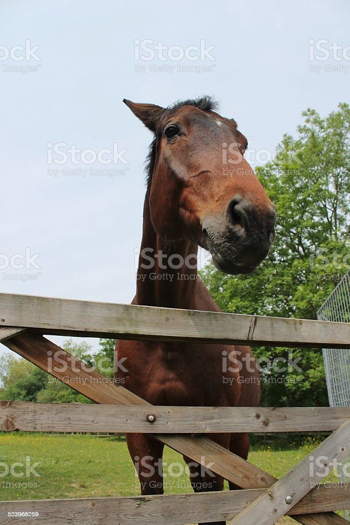 Horse in field and gate stock photo