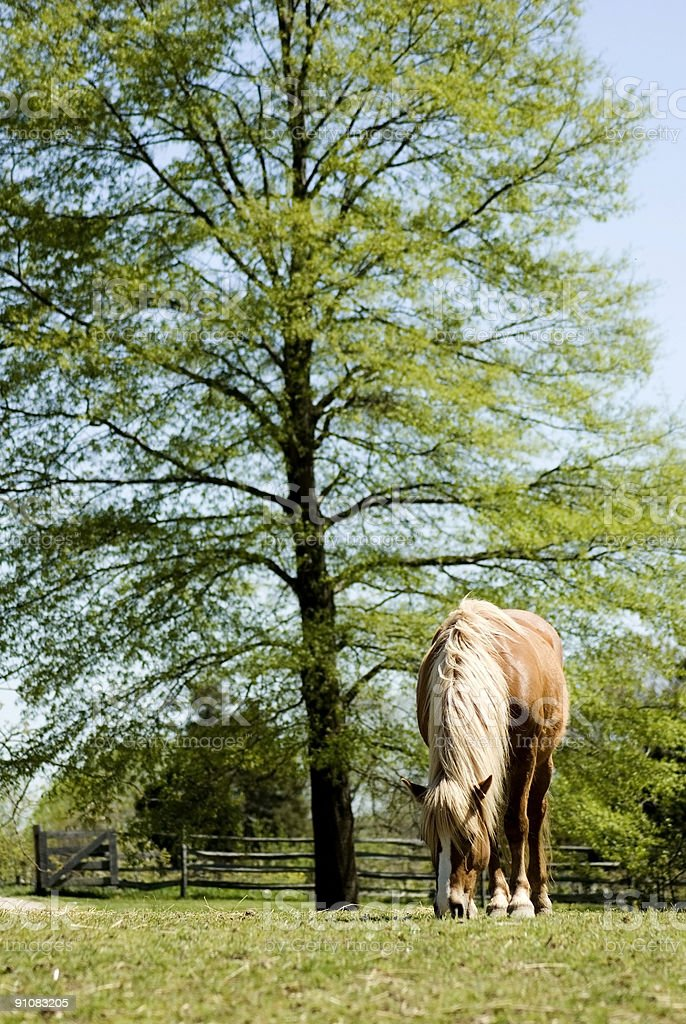 Horse in Field stock photo