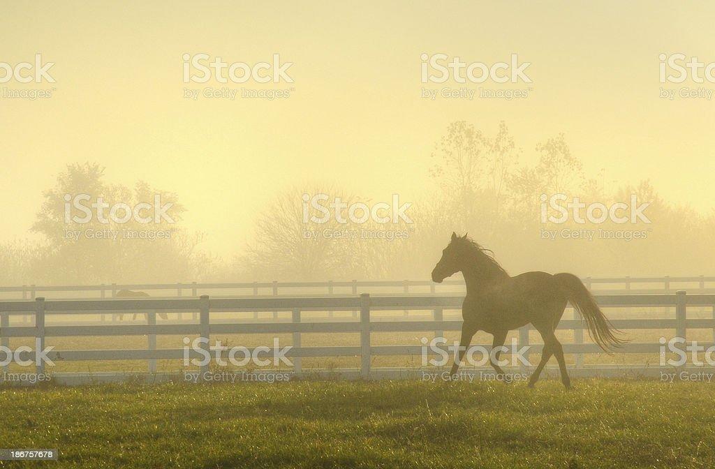 Horse in Fog stock photo
