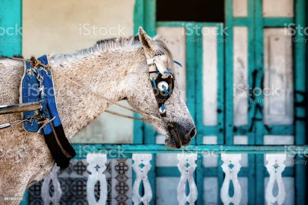 Horse in front of old house  Gibara in Cuba stock photo