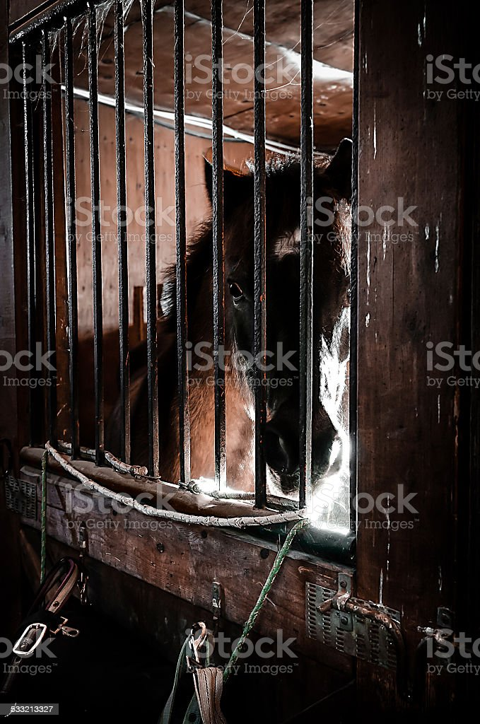 Horse in his box stock photo