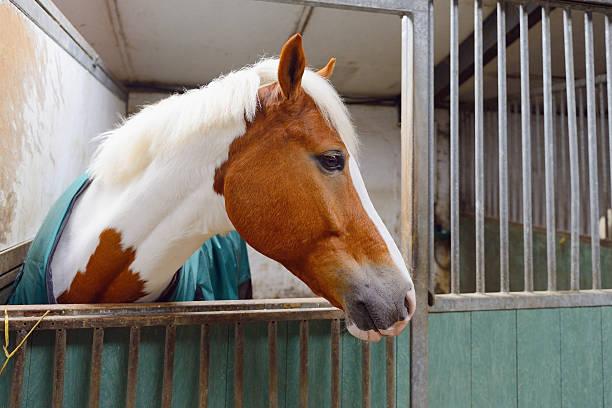 Cavallo nel manege casella - foto stock