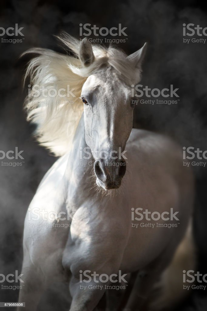 Horse in motion on black stock photo