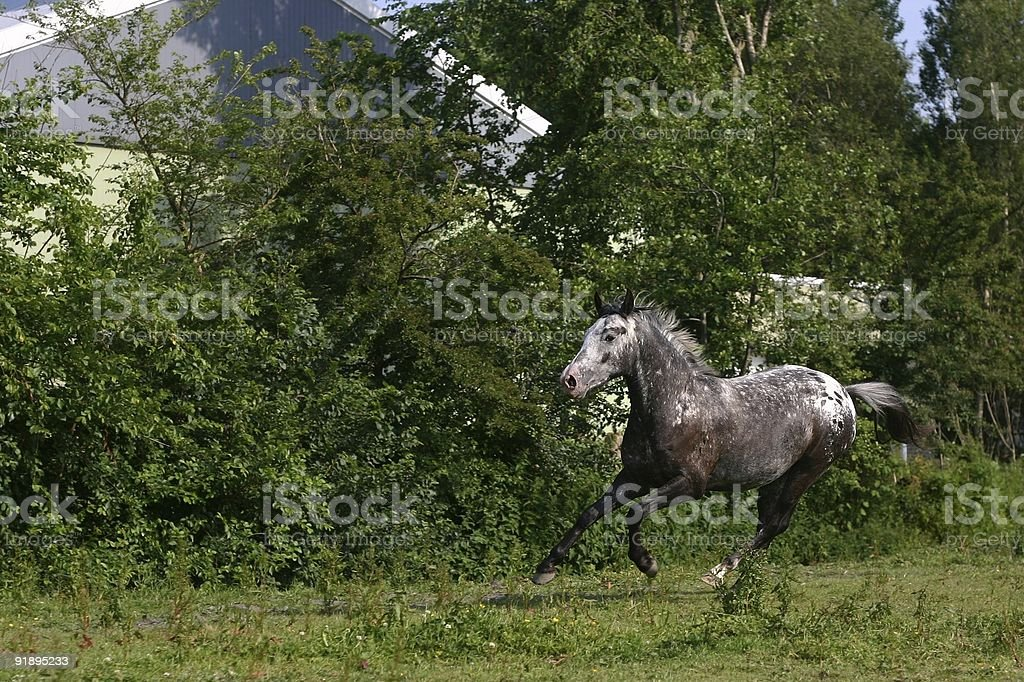 Horse in motion stock photo