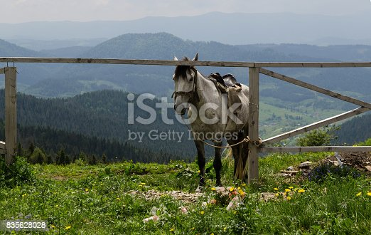 Horse in mountain. Beautiful natural landscape.