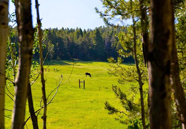Horse in Mountain Meadow stock photo