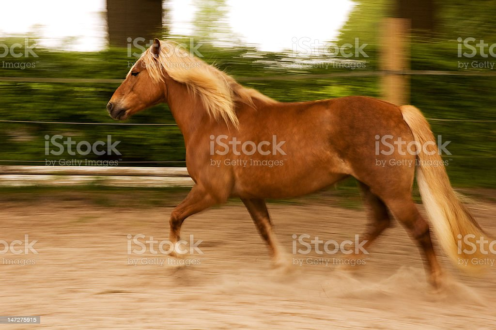 Horse in movement stock photo
