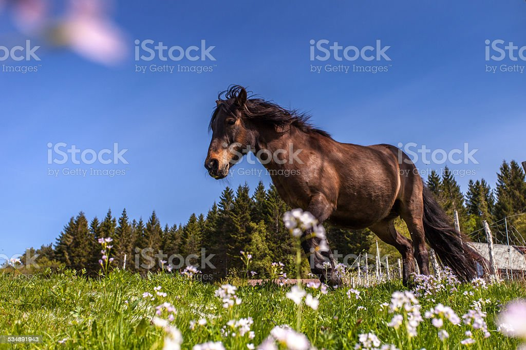 Pferd in der Natur stock photo