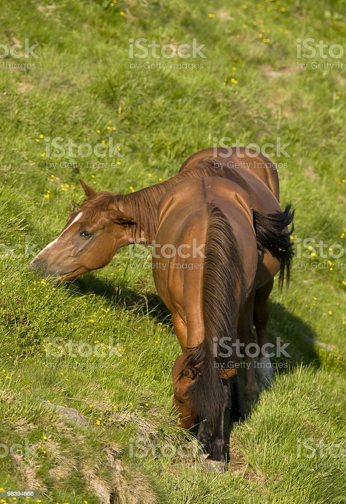 Horse In Nature royalty-free stock photo