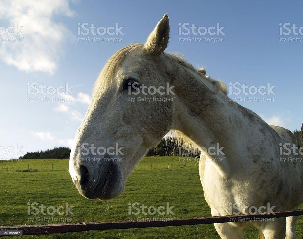 Horse en pasto foto de stock libre de derechos