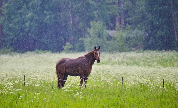 Horse in rain stock photo