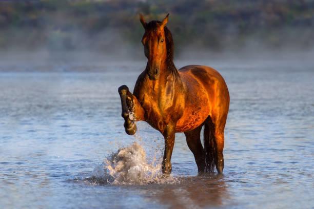 Horse in river picture id843612486?b=1&k=6&m=843612486&s=612x612&w=0&h=hf7i8zbavl87jnuiuf6js1xt5wudnch15qy06xtxipw=