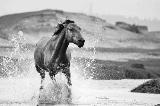 Horse in river picture id847030216?b=1&k=6&m=847030216&s=612x612&w=0&h=ycumxkxdyv5wbx8h0gyn8gd0fmgbm5quismlwd5pvtk=